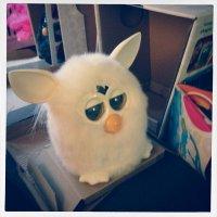 białe Furby