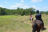 jeźdzcy na koniach na łonie natury